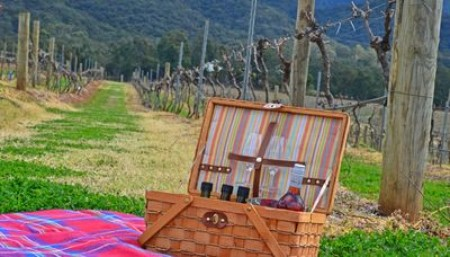 Picnic among the Vines