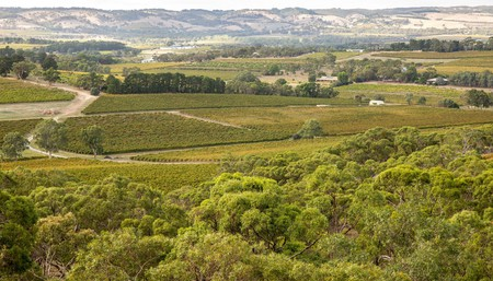 Scenic flight, wine making class and degustation