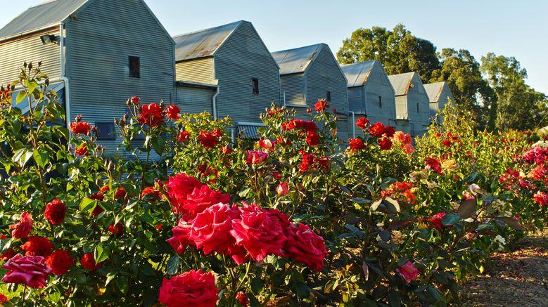 Originally published on www.pizzini.com.au, credit Jamie Durrant