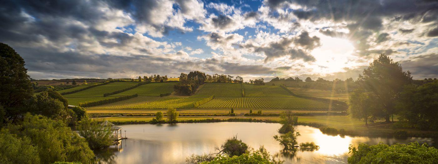 Josef Chromy Vineyard Tasmania