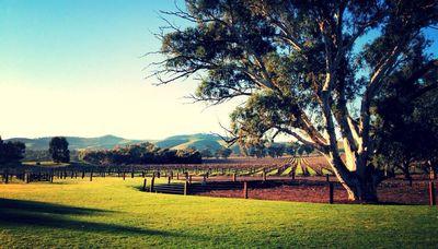 Meet the Winemaker - Nick Bruer, Jacob's Creek