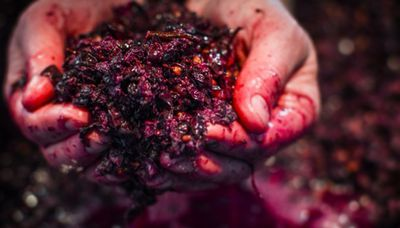 One for the Pinot Lovers